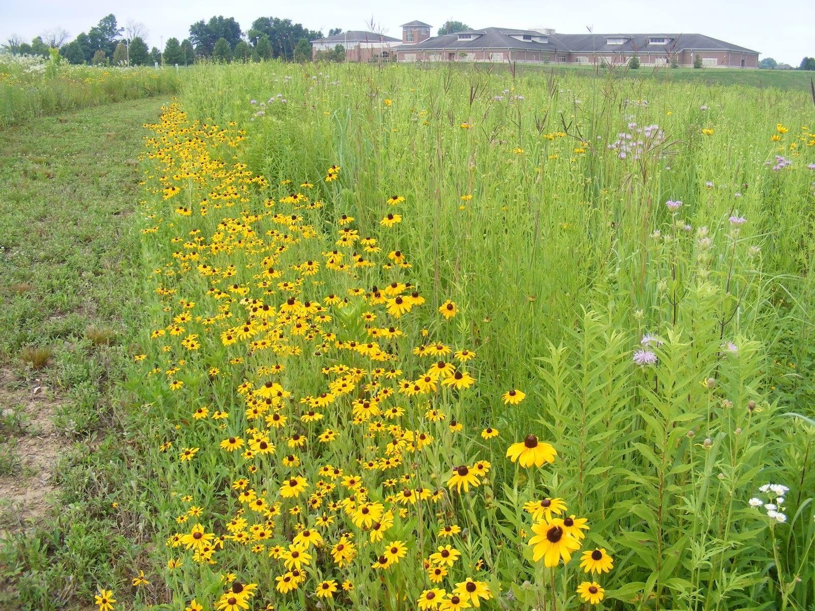 Land Lab in Full Bloom